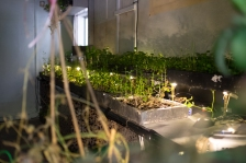 Plants with light display